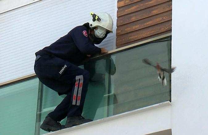 Antalya'da kumru cam ile panjur arasına sıkıştı! Ekipler seferber oldu