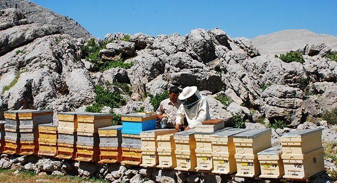 Aksekili bal üreticileri ilk hasat için hazırlıklarını tamamladı