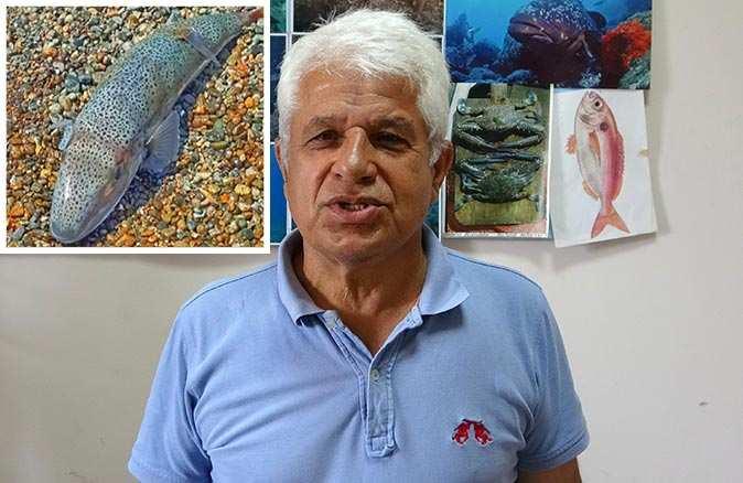 Prof. Dr. Mehmet Gökoğlu: Balon balıklarından korkmaya gerek yok