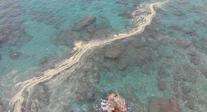 Alanya'da kıyıları deniz salyası kapladı