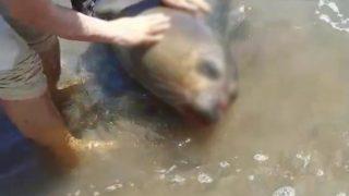 Demre'de kıyıya ölü Akdeniz Foku vurdu