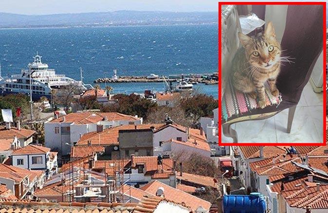 Mucize kedi Kaptan Paşa çalındıktan 9 yıl sonra feribotla evine döndü