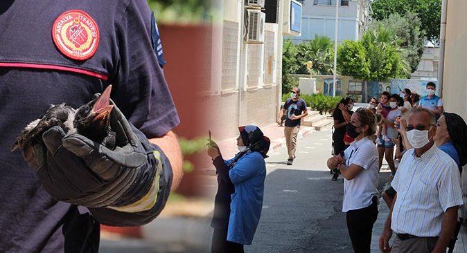 Antalya'da yavrularını korumak istedi! Çocuklara saldırı girişiminde bulundu