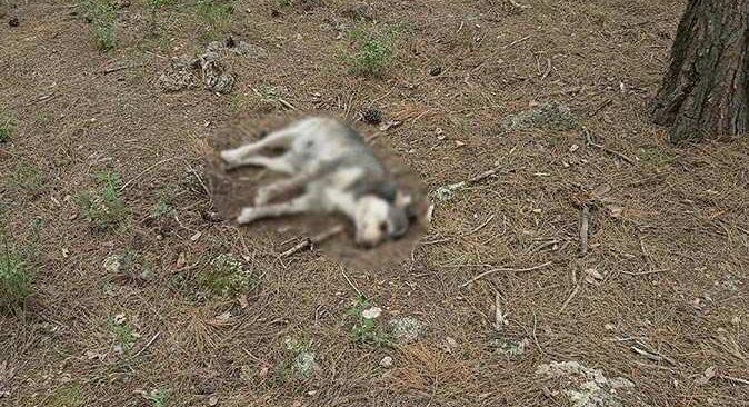 Antalya'da vahşet! Zehirlenerek öldürüldüler