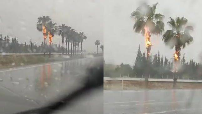 Antalya'da yıldırım düştü! Palmiye ağaçları alev alev yandı
