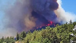 Muğla'da orman yangını! Ekipler seferber oldu
