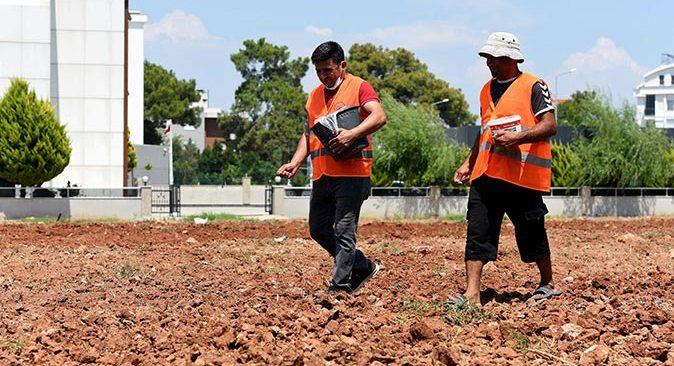 Muratpaşa Belediyesi susam tarımına başladı