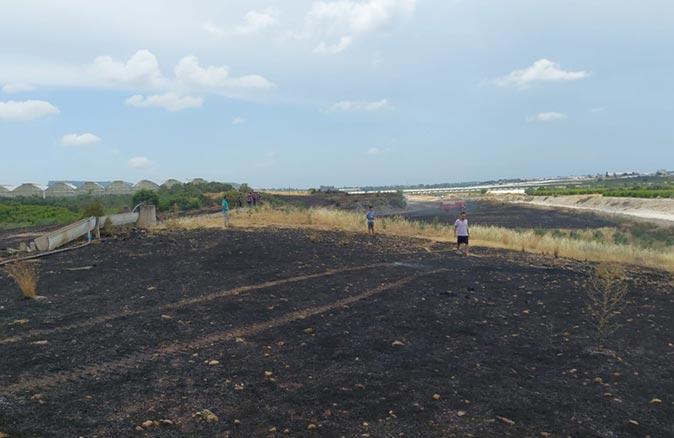 Antalya'daki yangında 20 dönüm tarım arazisi zarar gördü