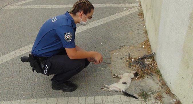 Kadın polis yaralı yavru kedinin başından dakikalarca ayrılamadı