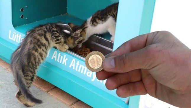 Alanya'da artık 1 TL karşılığı sokak hayvanlarını besleyebilirsiniz...