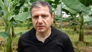 Prof. Dr. Hakan Sert uyardı: Muz seraları büyük bir tehlikeyi beraberinde getiriyor