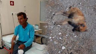 Antalya'da yürek sızlatan olay! Köpekleri zehirleyerek öldürdüler