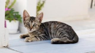 Akılalmaz vahşet! Yavru kedileri yediğini itiraf etti, sınır dışı edilecek