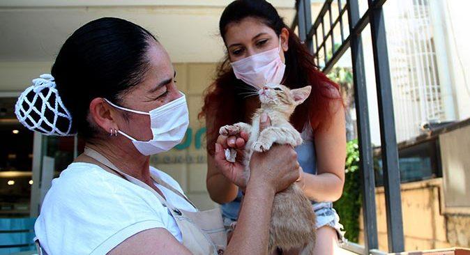 Antalya'da kedileri ölümden kurtaran hayvanseverler isyan etti: Ne istediniz bu canlılardan?