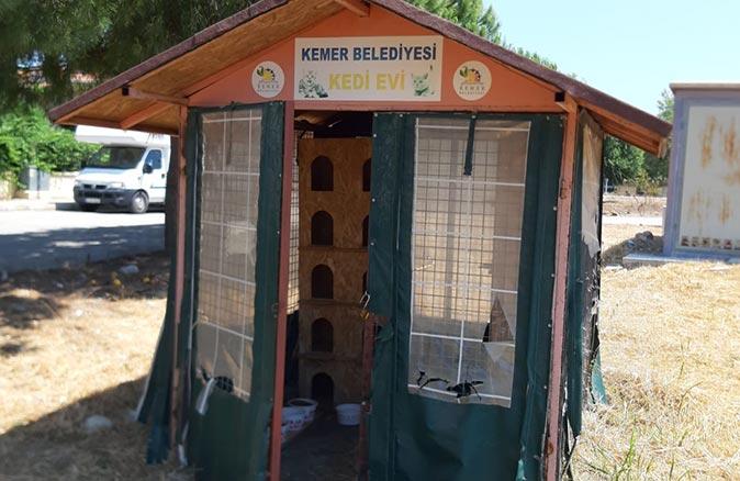 Kemer Belediyesi kedi beslemelerine devam ediyor