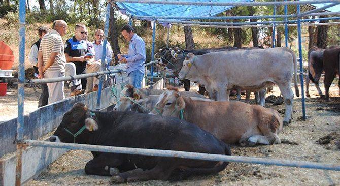 Antalya'da turizmdeki et açığı nasıl kapatılır! Uzmanlar yanıt verdi