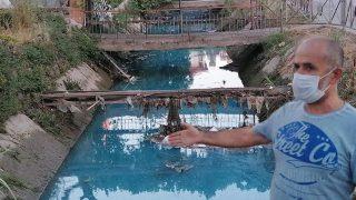 Manavgat'ta balıklar tek tek ölmeye başladı, görenler belediyeyi aradı