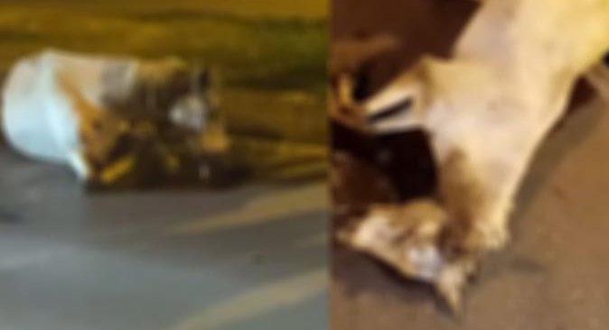 Antalya'da aniden yola çıkan at, otomobilin çarpması sonucu telef oldu