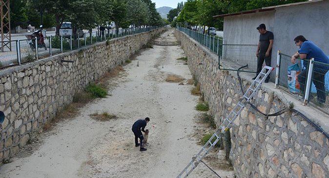 Antalya'da boş sulama kanalına düşen köpeği itfaiye kurtardı