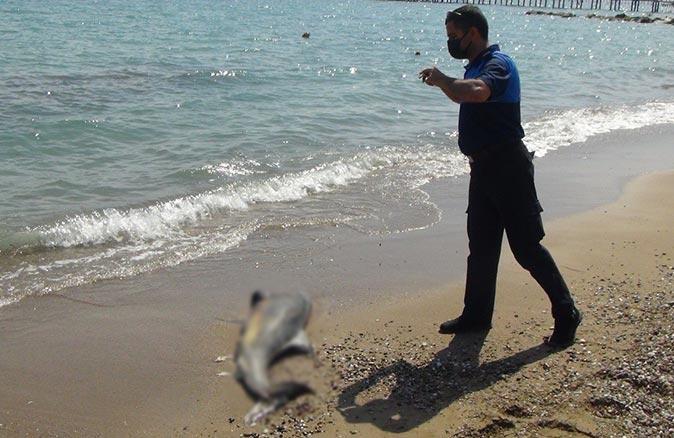 Manavgat'ta denizde ölü yunus balığı bulundu