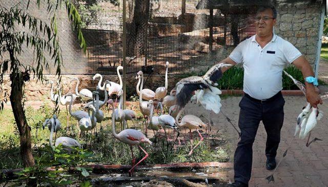 Yasadışı yollardan ele geçirdikleri flamingolara işkence etmişler...