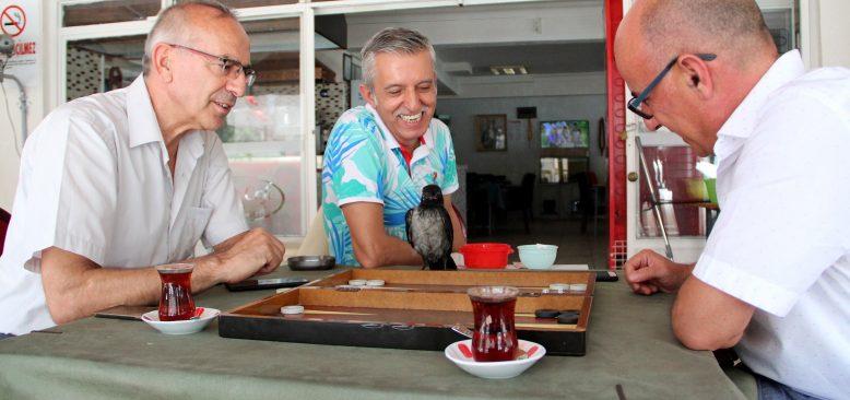 Antalya'da yavru karga, kafenin maskotu oldu