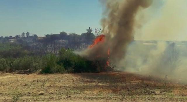 Antalya'daki makilik alanda yangın! 20 çam ağacı yandı...