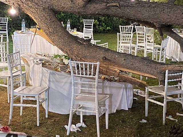 Antalya'da korkunç olay! Düğün sırasında ağaç devrildi