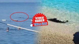 Antalya'da görenler şaşkınlıklarını gizleyemedi