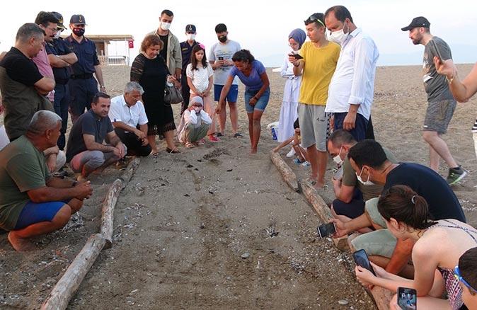 Manavgat'ta 23 yavru caretta caretta denizle buluştu