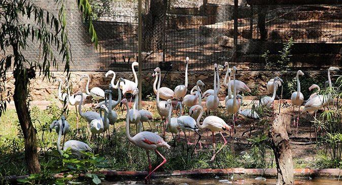 Yasa dışı yollarla satılmak üzereyken yakalanan flamingolar koruma altına alındı