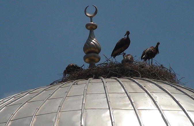 Antalya'da sıcak hava leylekleri de vurdu! Simsiyah oldular