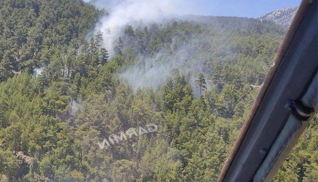 Manavgat'ta kızılçam ormanında yangın