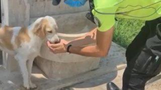 Antalya'da polis ile köpeğin dostluğu büyük beğeni topladı