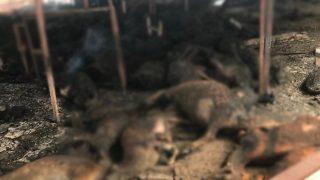 Manavgat'taki yangında 100'e yakın hayvan yanarak can verdi