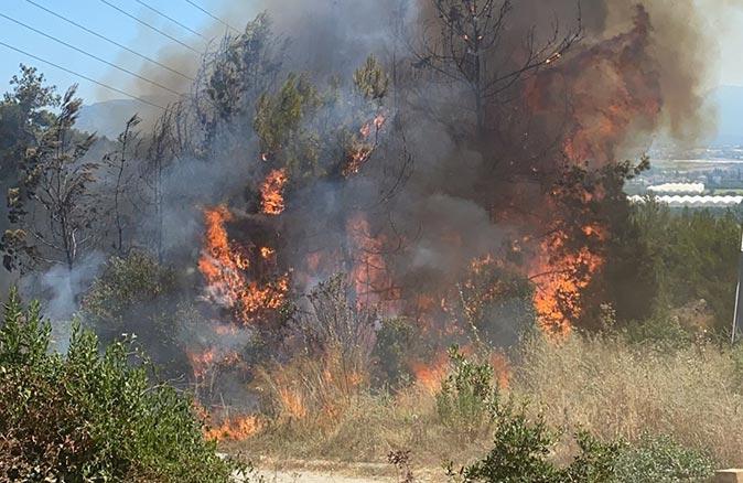 Antalya'da orman ve makilik alan cayır cayır yandı
