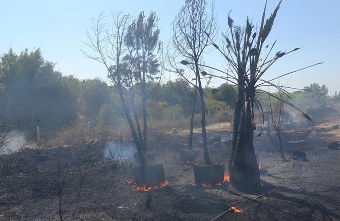 Antalya'da fidanlıkta yangın! Büyük panik yarattı