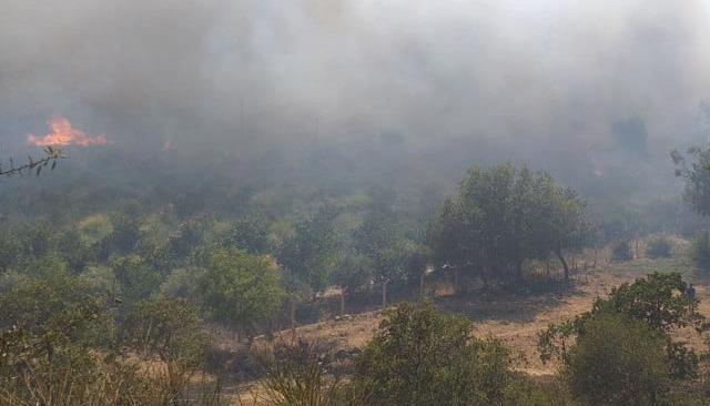 Son Dakika: 11 gündür devam ediyordu! Muğla Milas yangını kontrol altına alındı