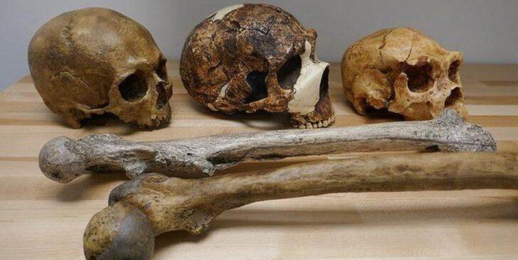 Evrim araştırmacıları: İklim şartları, insanın beden ve beyin büyüklüğü üzerinde etkili