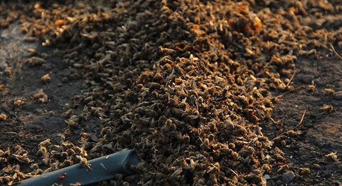 Kalemler Mahallesi'nde 100 arı kovanından 80'i yandı