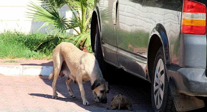 Antalya'da 5 yavru köpek telef olmuş şekilde bulundu