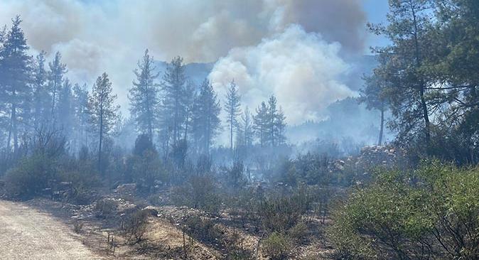 Son dakika... Burdur'un Çobanpınarı köyünde orman yangını çıktı