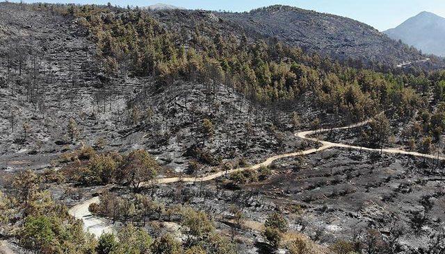 Antalya'daki yangın bölgesi için kamulaştırma kararı