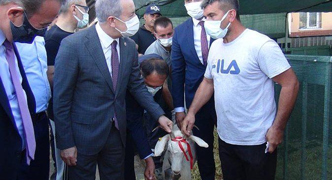 MHP'den Manavgat'taki yangınzedelere hayvan desteği