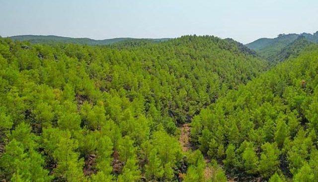 13 yıl önce yanmıştı! Orman Genel Müdürlüğü son halini paylaştı