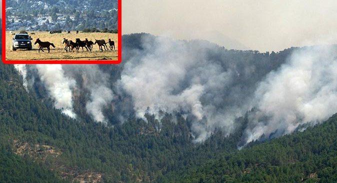 Antalya'daki yangın yılkı atlarını da tehdit ediyor