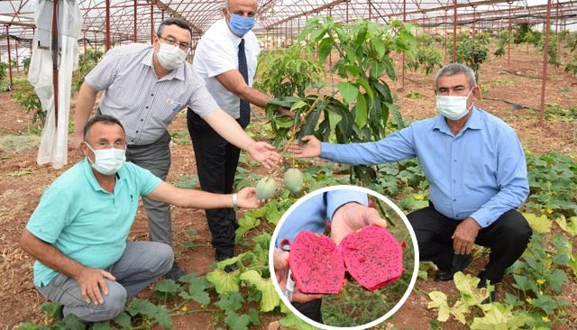 Geleneksel ürünlerde maliyet arttı! Çiftçiler tropik meyvelere yöneldi
