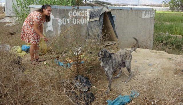 Garson, çöpe atılan yemeklerle sokak köpeklerini besliyorlar