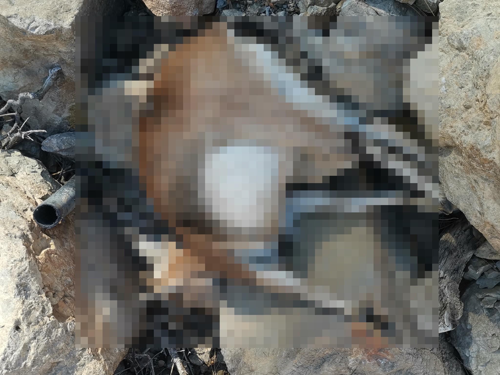 Avlanması yasak olan yaban keçisi vurulmuş halde bulundu