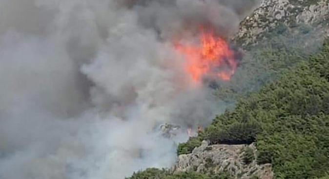 Son dakika... Hatay'ın Antakya ilçesinde orman yangını çıktı